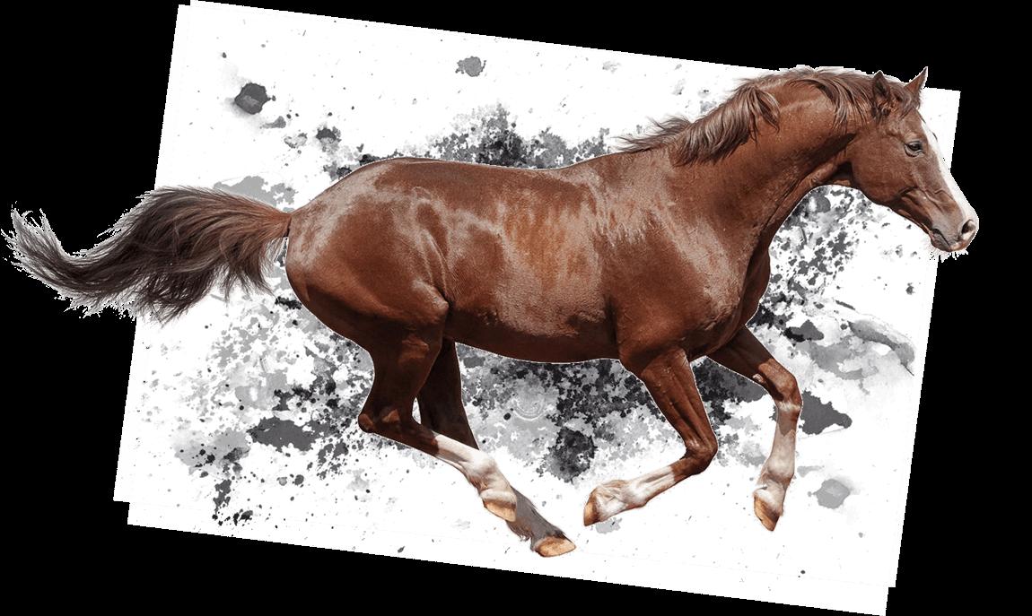 Horse Placenta