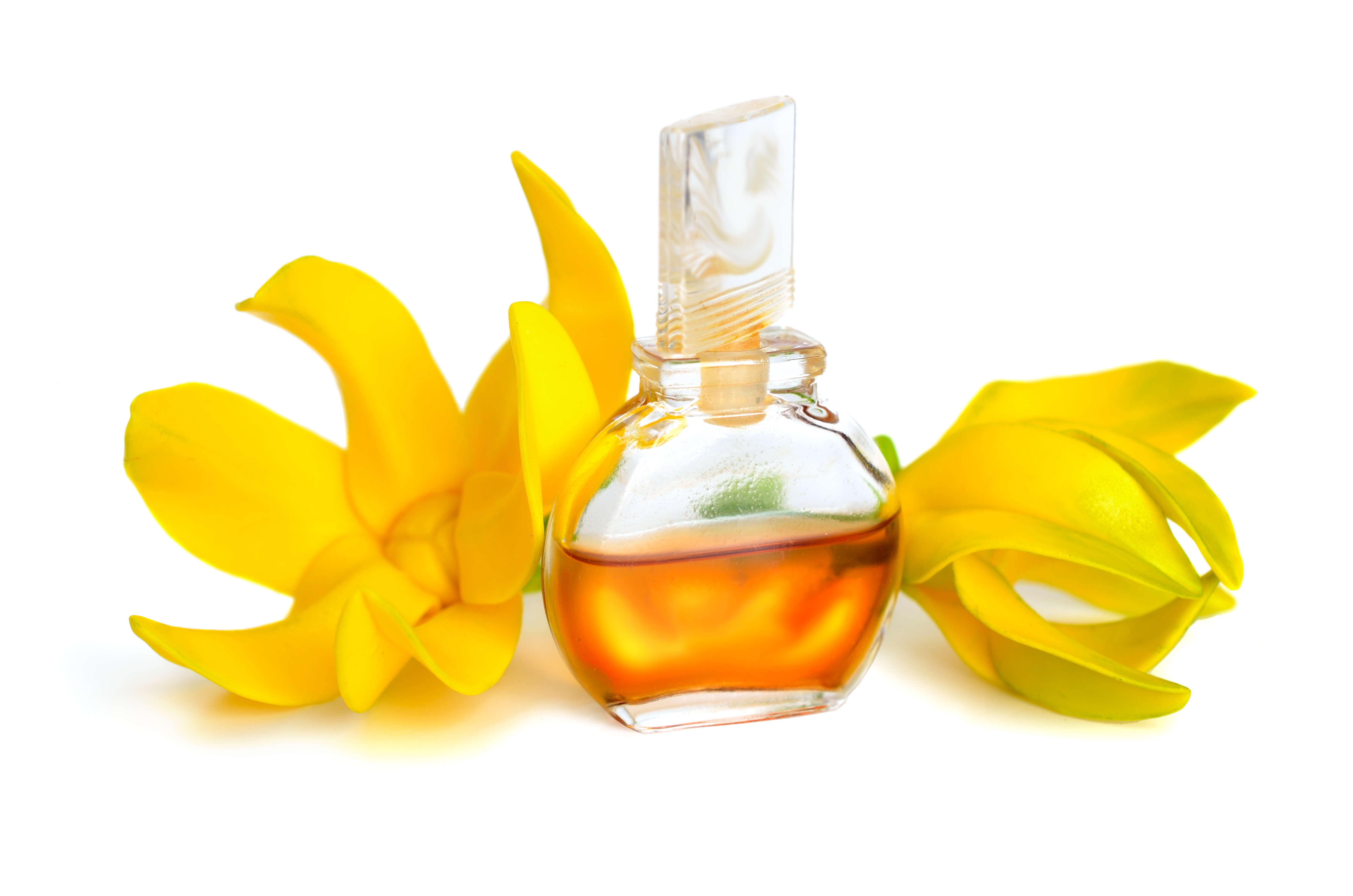 Cananga Odorate Flower Oil