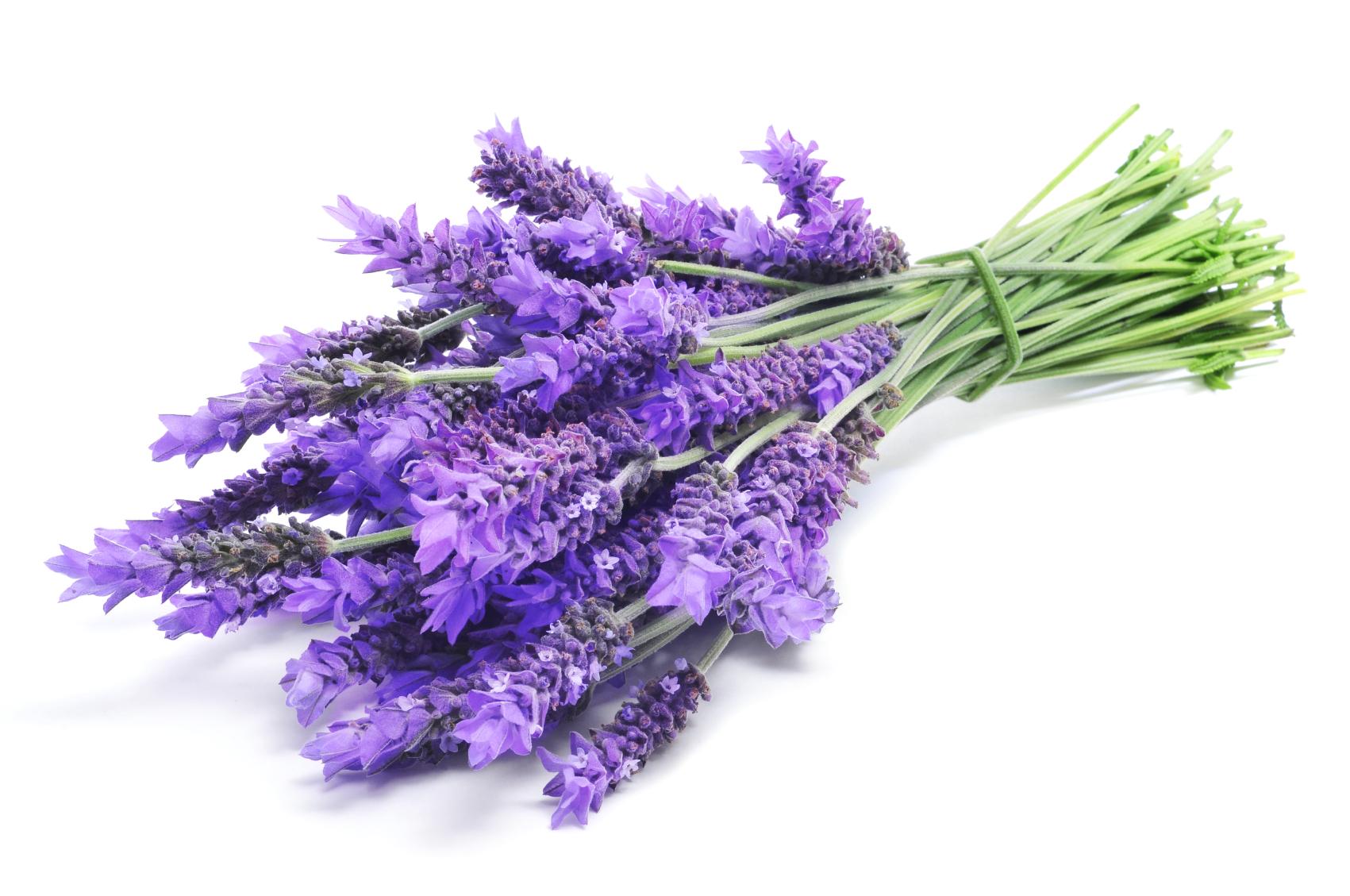 Lavandula Angustifolia (Lavender) Oil