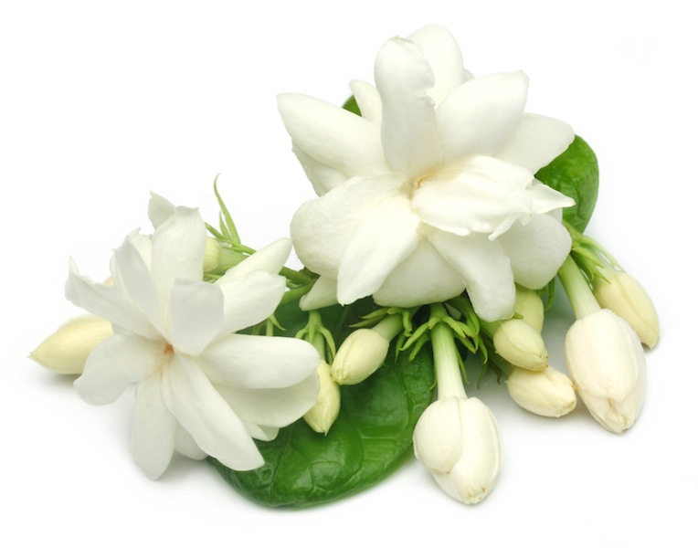 Jasminum Officinale (Jasmin) Oil